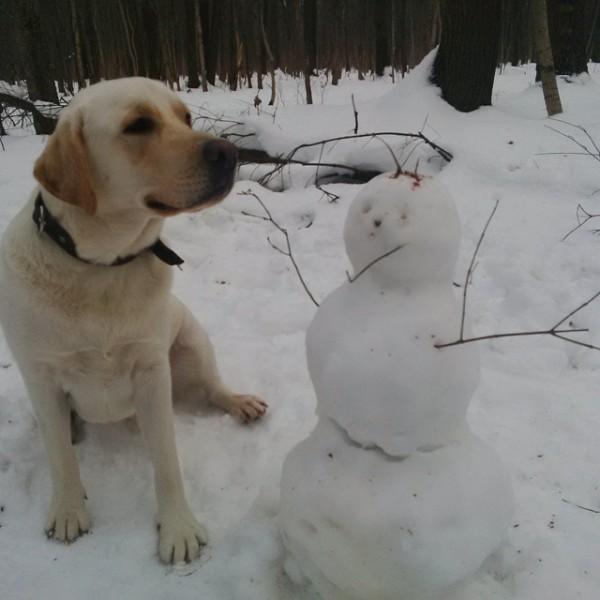 perritos-munecos-nieve13