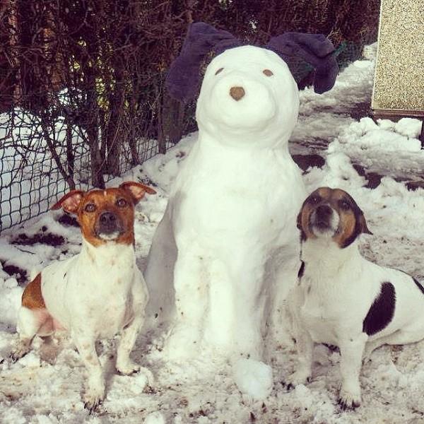 perritos-munecos-nieve4