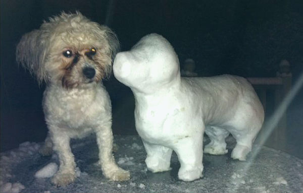 perritos-munecos-nieve6