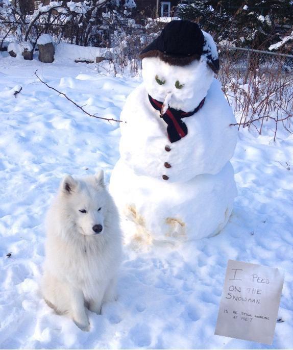 perritos-munecos-nieve7