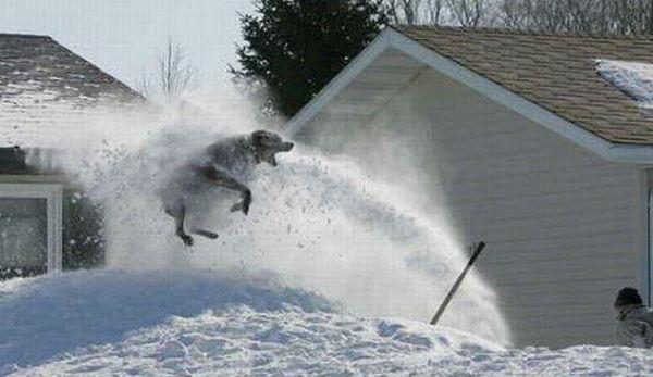 perritos-munecos-nieve8