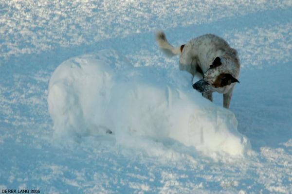 perritos-munecos-nieve9