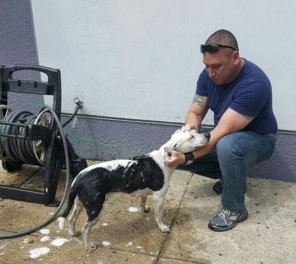 perro abandonado Gorgi es ahora policia Puerto Rico 11