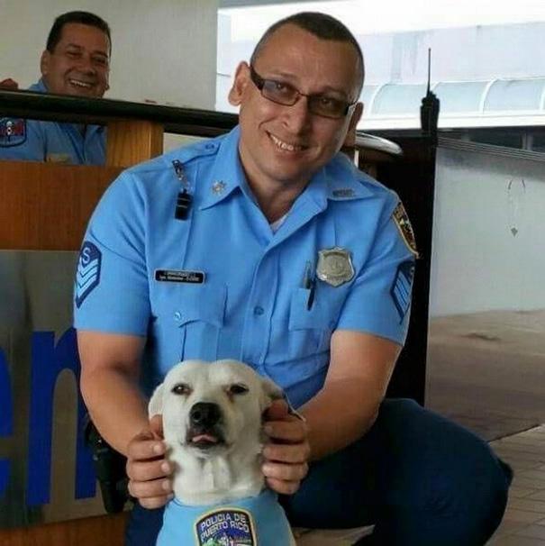 perro abandonado Gorgi es ahora policia Puerto Rico 13