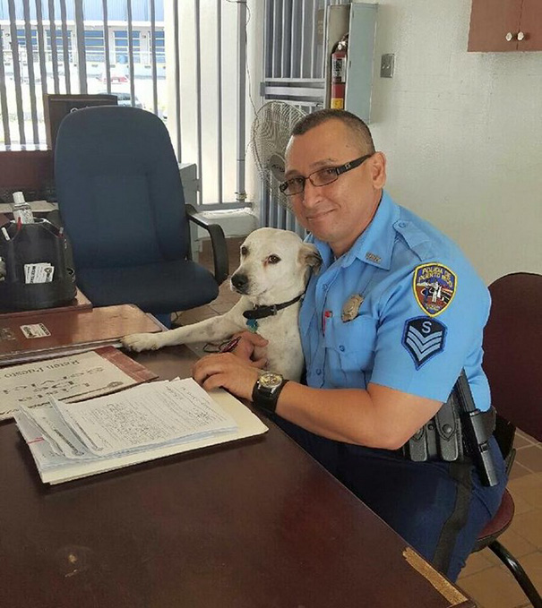 perro abandonado Gorgi es ahora policia Puerto Rico 2