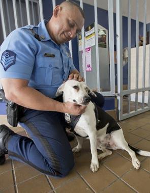 perro abandonado Gorgi es ahora policia Puerto Rico 4