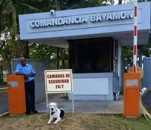 perro abandonado Gorgi es ahora policia Puerto Rico 5
