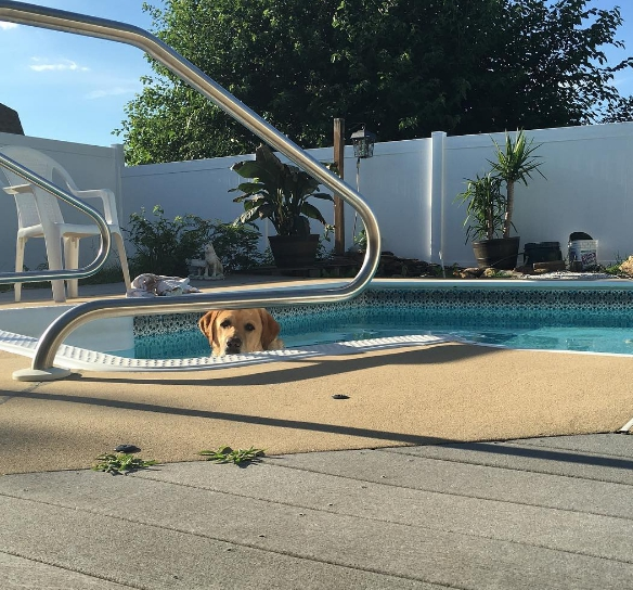 perro-camina-en-la-piscina5