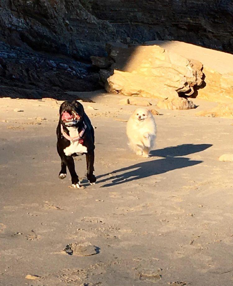 perro refugio asustado para caminar sale al exterior 11