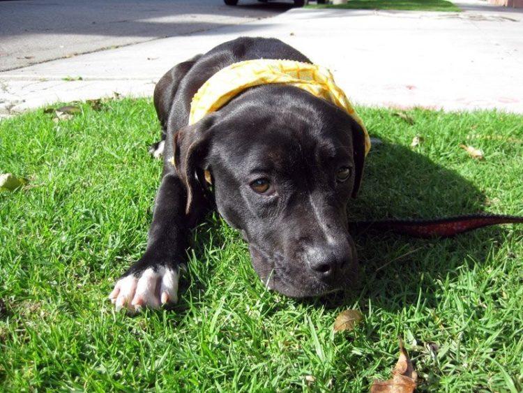 perro refugio asustado para caminar sale al exterior 2