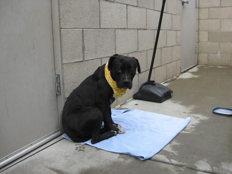 perro refugio asustado para caminar sale al exterior 5