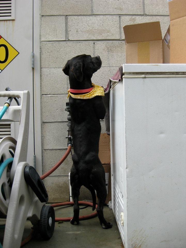 perro refugio asustado para caminar sale al exterior 6
