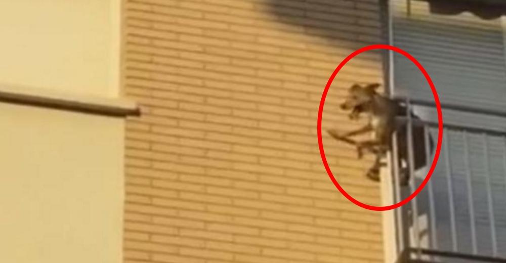 Vecinos ven a lo lejos el momento en que un desesperado perrito se lanza de un balcón