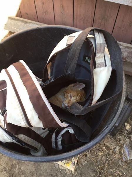 perros abandonados verano gato