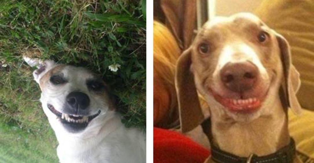 perros felices id