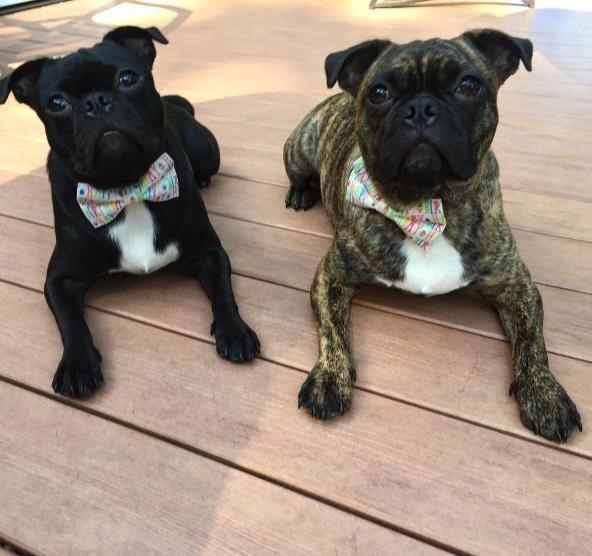 perros hermanos adoptados 10
