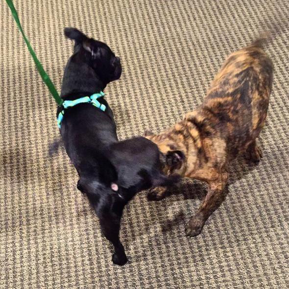 perros hermanos adoptados 3