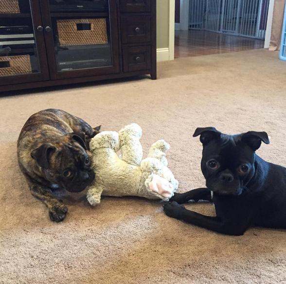perros hermanos adoptados 4