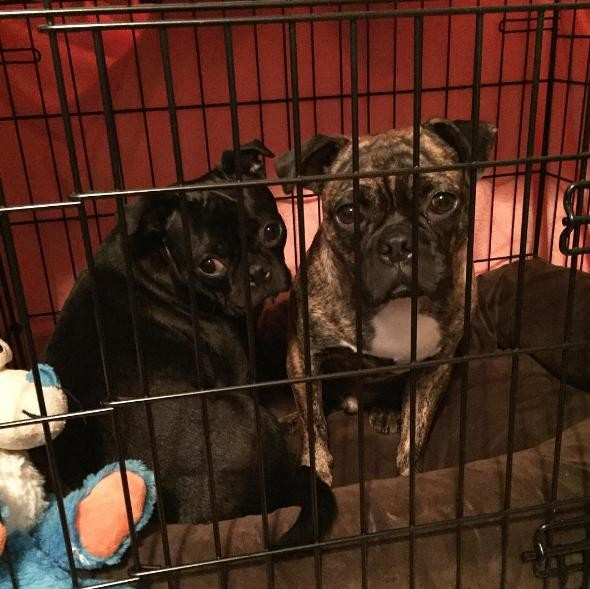 perros hermanos adoptados 5