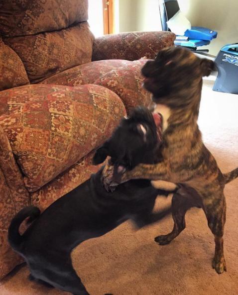 perros hermanos adoptados 8