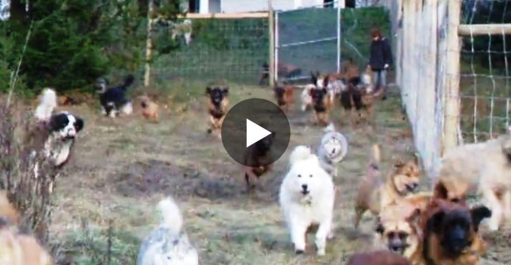 perros-liberados-45-play