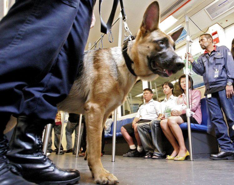 perros-podran-viajar-en-el-metro2