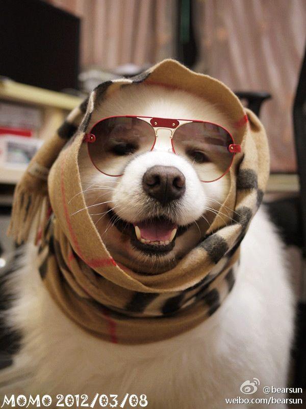 perros sonrientes 1
