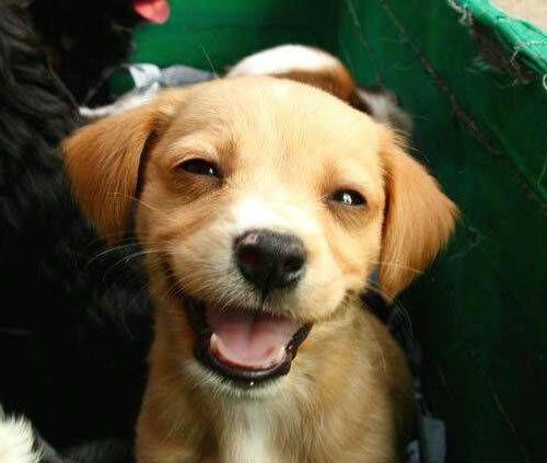 perros sonrientes 13