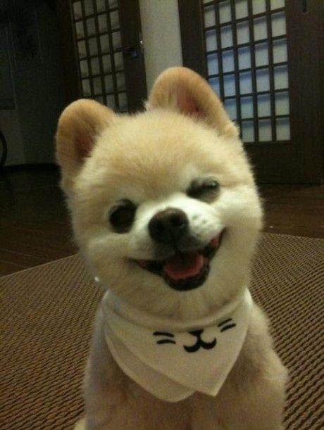 perros sonrientes 14