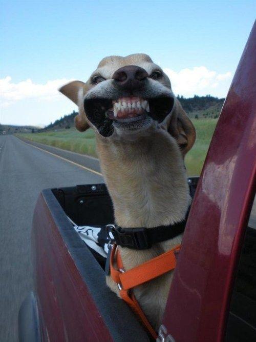 perros sonrientes 5