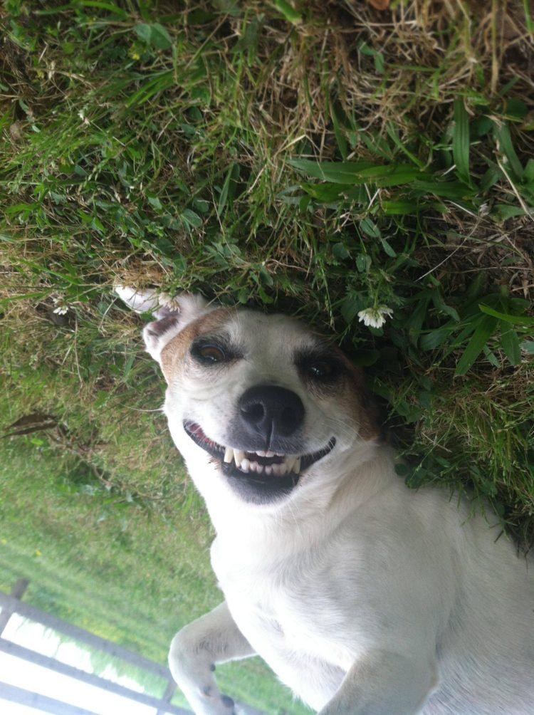 perros sonrientes 6