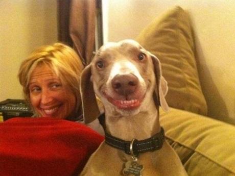 perros sonrientes 7