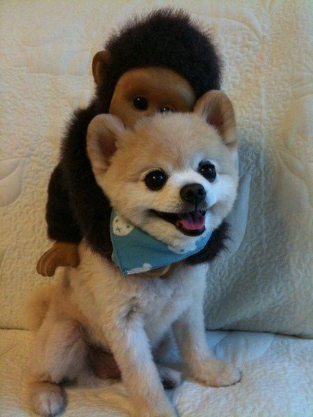 perros sonrientes 9