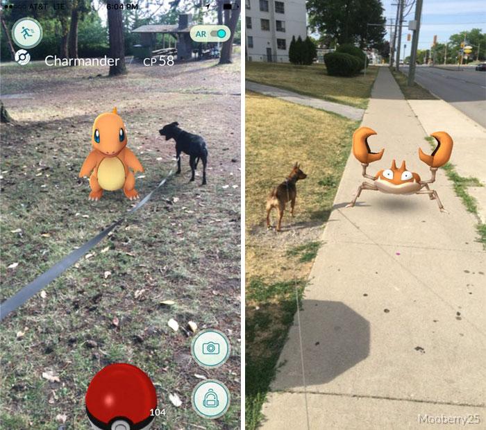 pokemon go perros 10