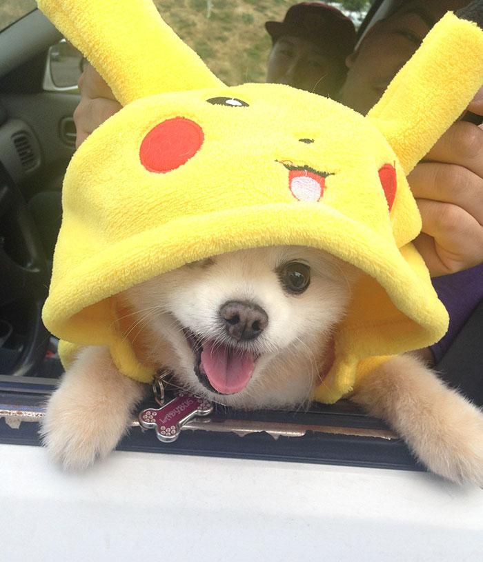pokemon go perros 3