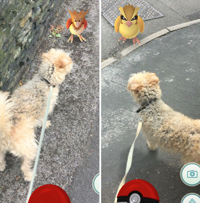 pokemon go perros 7