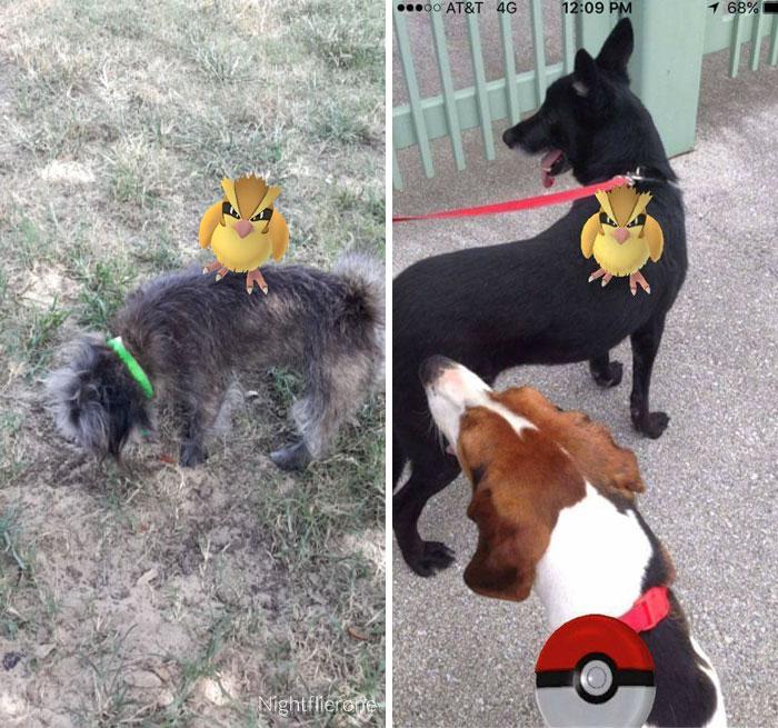 pokemon go perros 9