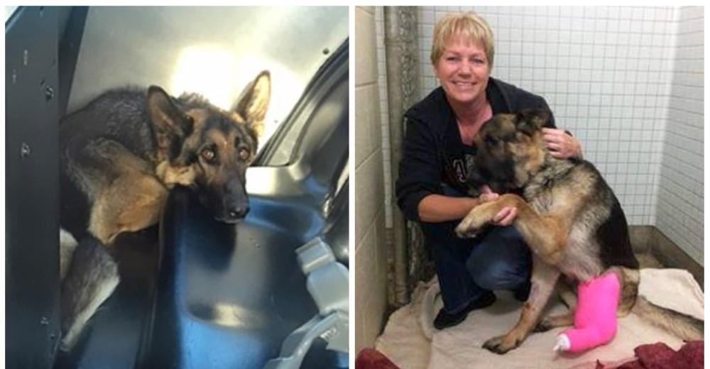 Cambió el destino de una perrita que sobrevivió 5 semanas abandonada en una autopista