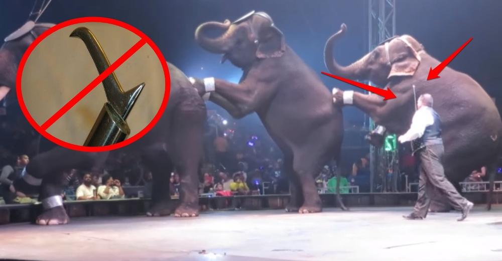 prohiben-herramienta-para-entrenar-elefantes5 - Copy
