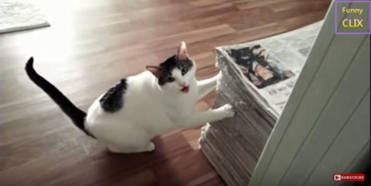 prueba-gatos-carinosos1