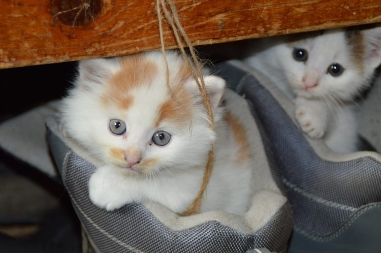 razones gatos 1