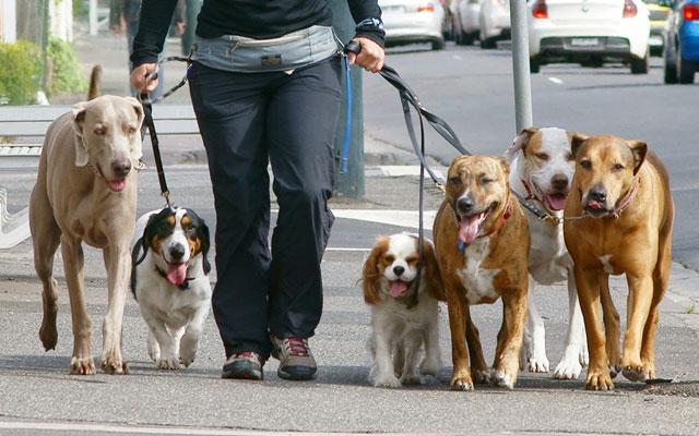 sabadell-paseo-perros-dos-veces-por-dia1
