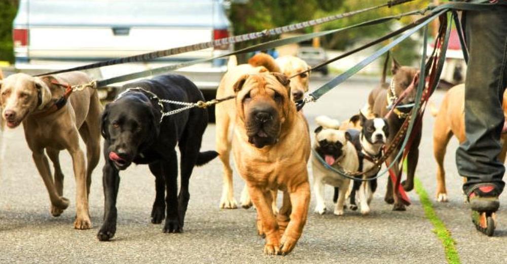 sabadell-paseo-perros-dos-veces-por-dia3 - Copy