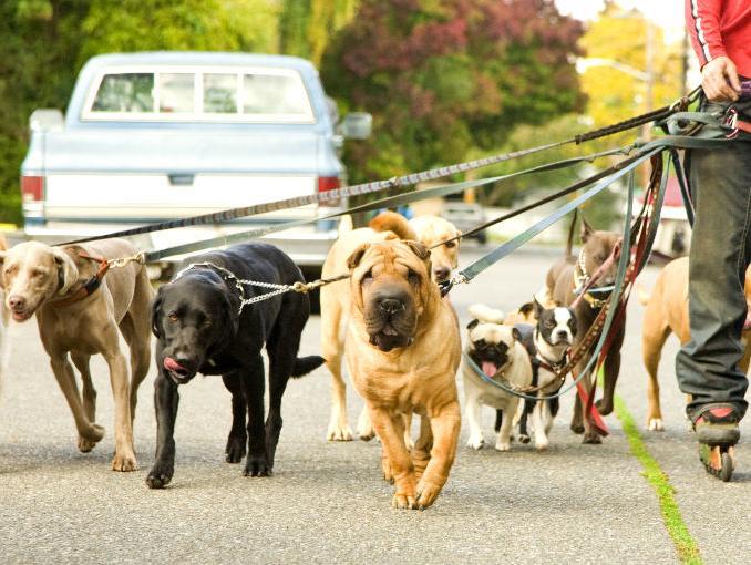 sabadell-paseo-perros-dos-veces-por-dia3