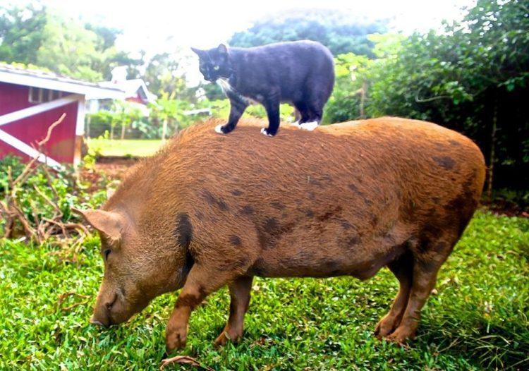 venado y jabalí amigos gatos