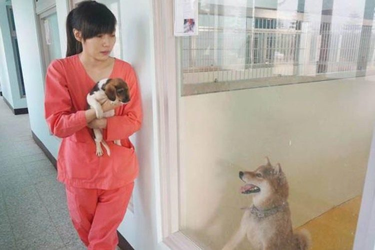 veterinaria-se-suicida-por-sacrificar-animales5