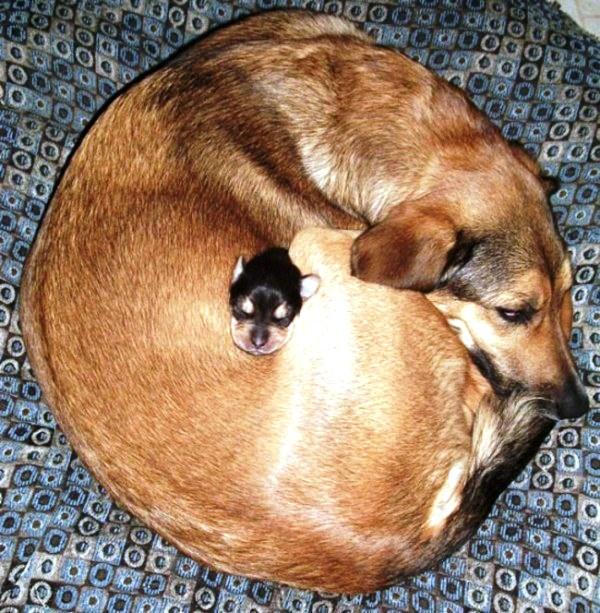 20 cachorros pequeños 11