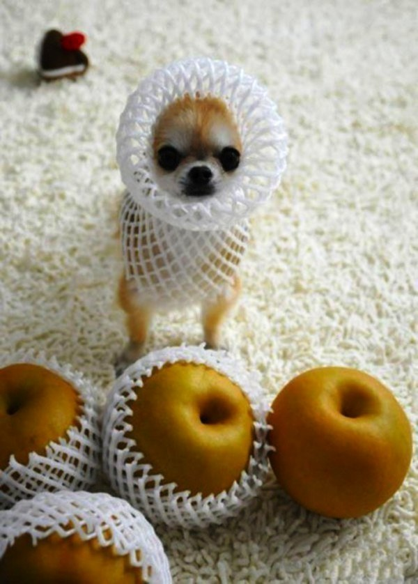 20 cachorros pequeños 13