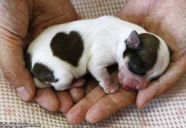 20 cachorros pequeños 14