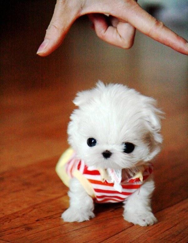 20 cachorros pequeños 17